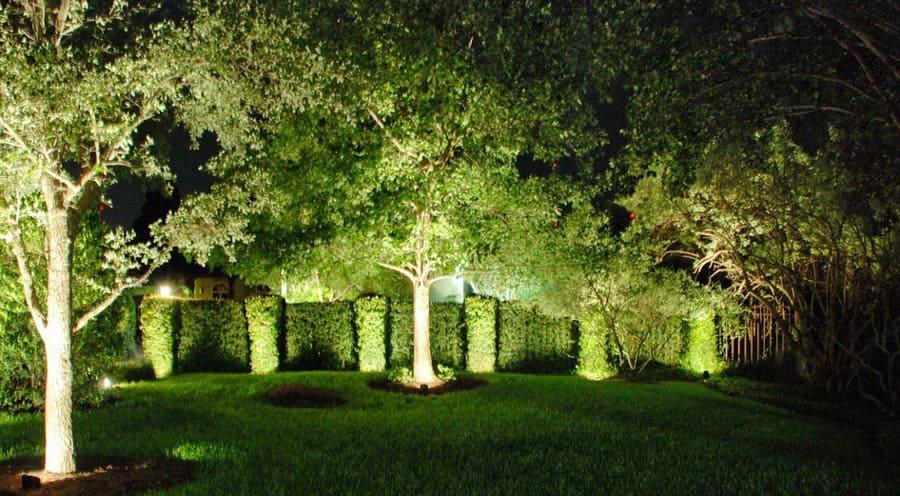 освещение деревьев